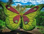 Огромная красочная бабочка