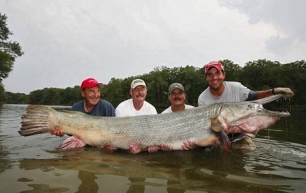 Картинки больших рыб