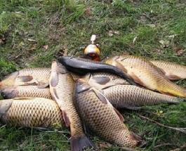 Рыбные места: где в Киеве лучше клев