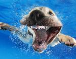 Щенок задорно смеется под водой