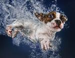 Малыш научился плавать