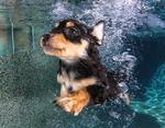 Уверенный пловец