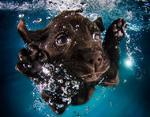 Щенок-пловец
