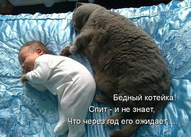 Фото: Смешные коты: для жизни только позитив, фотографии ... бритни спирс