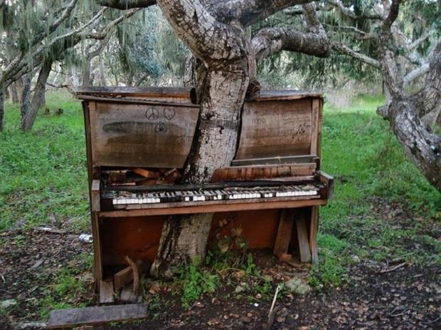 Пианино и дерево
