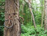 Брошенный велосипед стал реликвией