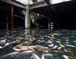 Рыбы в Торговом Центре