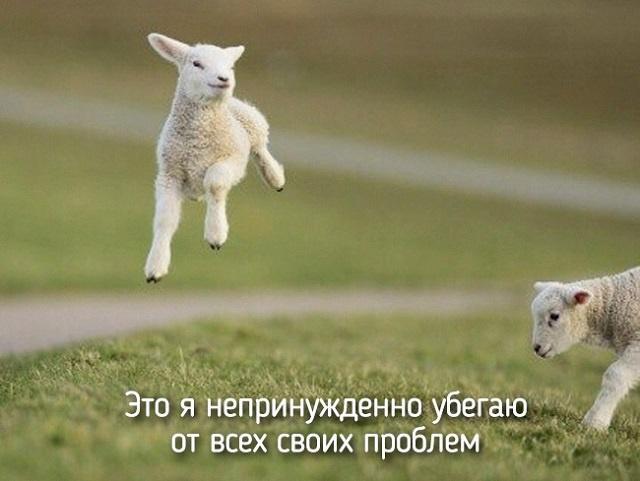 http://img.joinfo.ua/g/2015/05/800x0/2287_555ee4c582558.jpg
