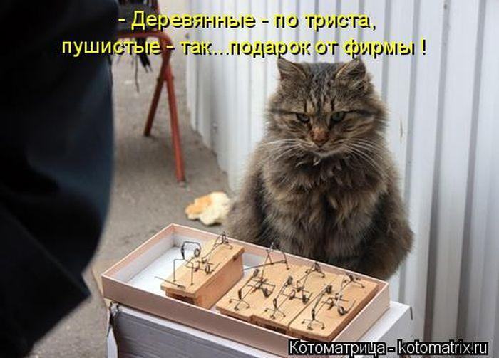 http://img.joinfo.ua/g/2015/08/800x0/3354_55d71247323c0.jpg