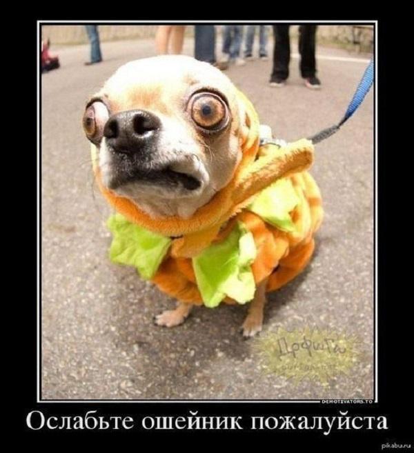 http://joinfo.ua/images/gallery/2015/09/3454_55e96da6bbb48.jpg