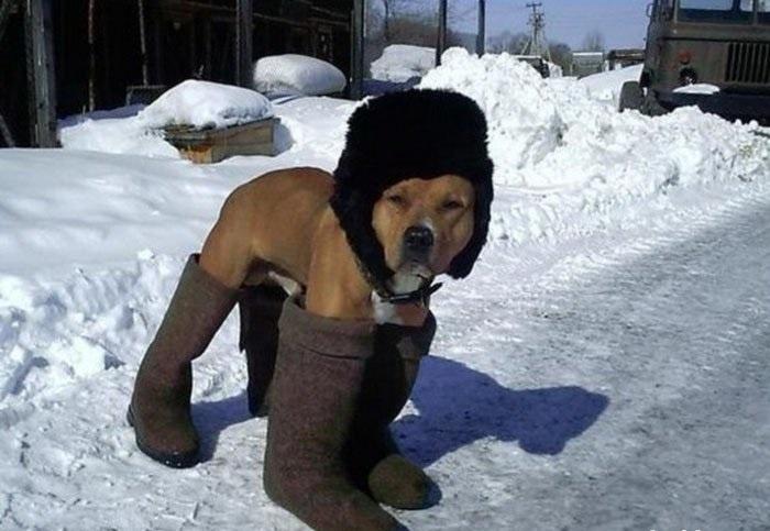 Смешные картинки вот и зима