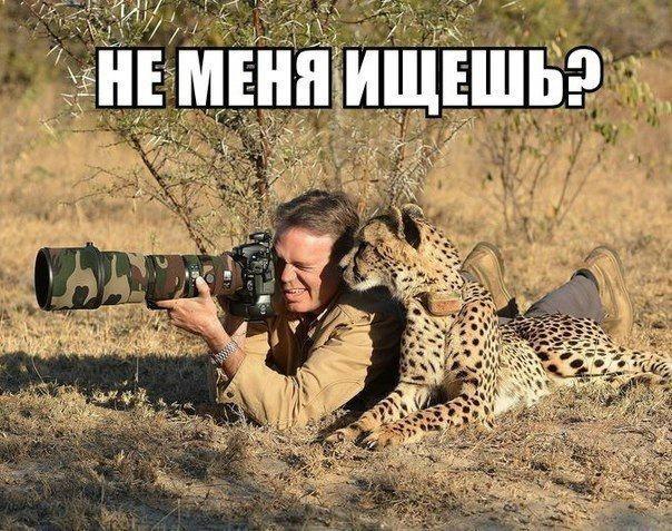 http://img.joinfo.ua/g/2015/10/800x0/3711_560d3a0ece79c.jpg