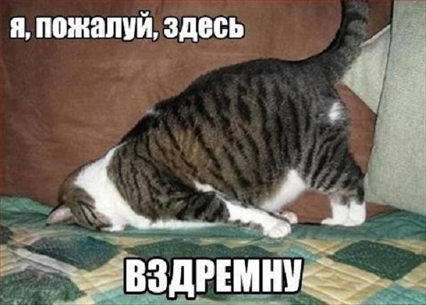 http://img.joinfo.ua/g/2015/10/800x0/3831_561e34fbb5c0e.jpg