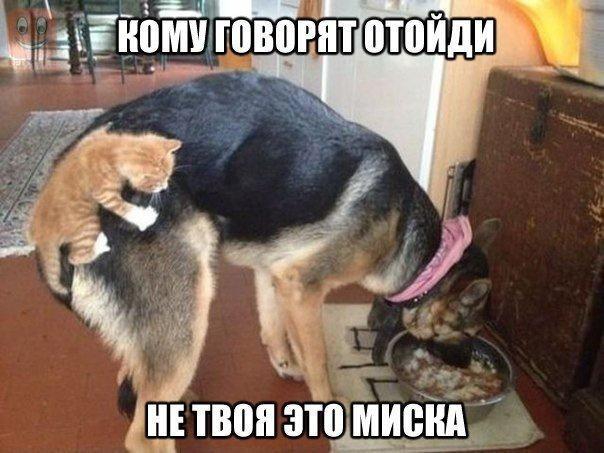 http://img.joinfo.ua/g/2015/11/800x0/3989_5638abde9daf1.jpg