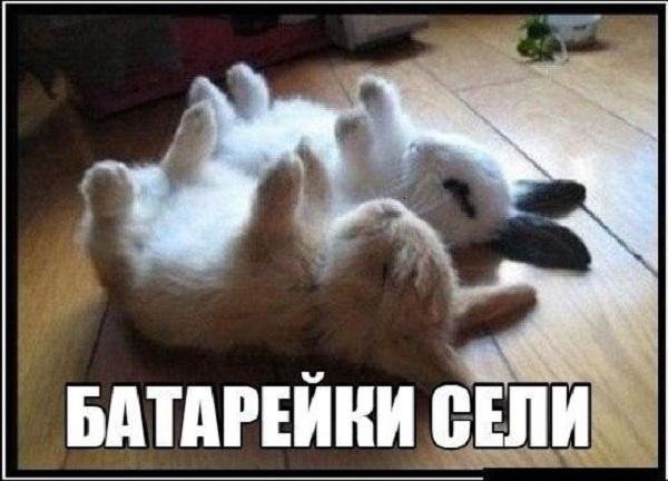 http://img.joinfo.ua/g/2015/11/800x0/4011_563b762f8931b.jpg