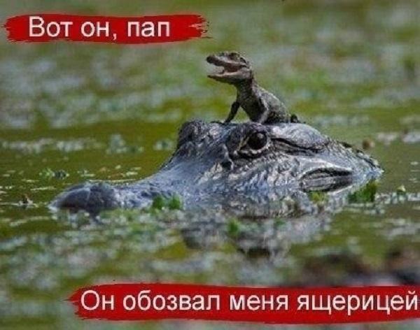 http://img.joinfo.ua/g/2015/11/800x0/4011_563b763036fa2.jpg