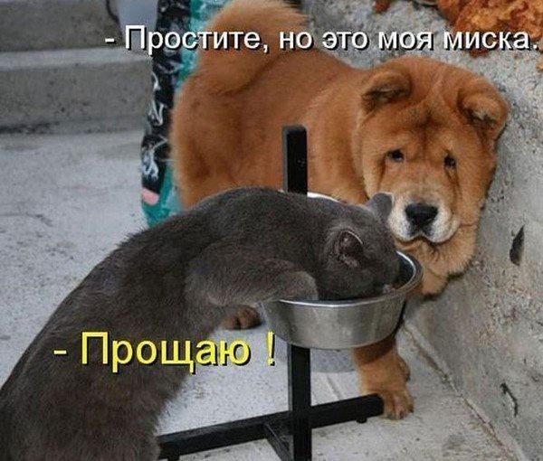 http://img.joinfo.ua/g/2015/12/800x0/4392_5681571712bac.jpg