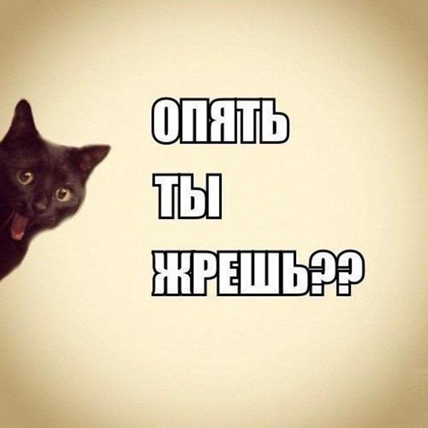 Жрешь картинка кошка