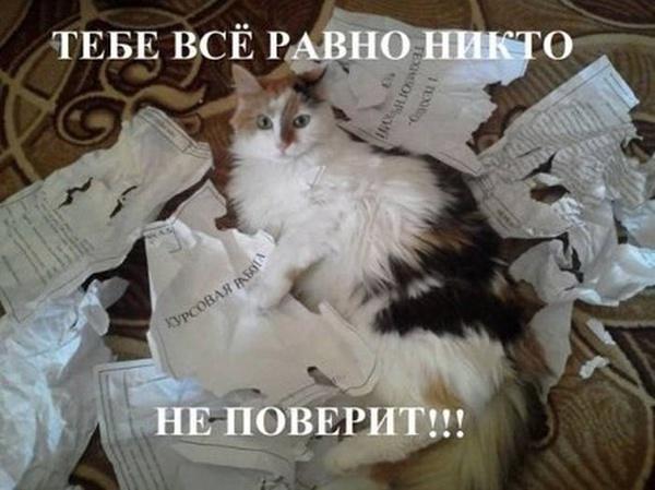 http://img.joinfo.ua/g/2016/02/800x0/4630_56b8aa3d1b5b6.jpg