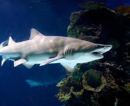 Акула из Ocean Plaza готовится к переезду