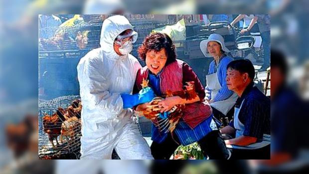 В Китае количество заболевших птичьим гриппом H7N9 растет