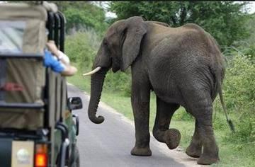 ДТП со слоном. Кто виноват?