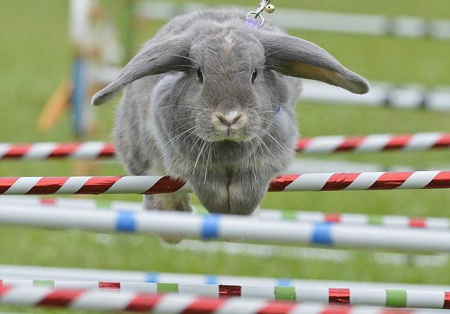 Первые украинские кроличьи бега