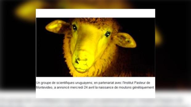 Фосфоресцирующая овца