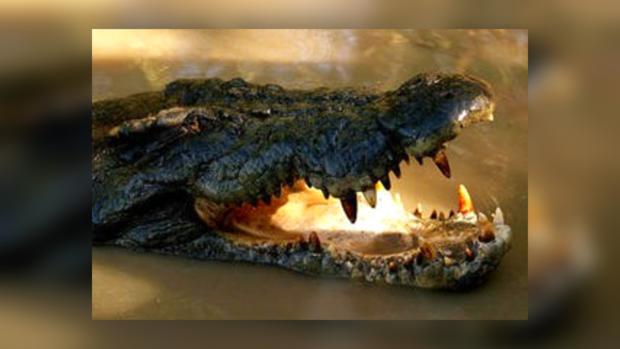 Крокодил напал на нарушителя