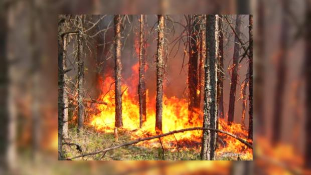 Весенняя жара уже принесла в Украину пожары