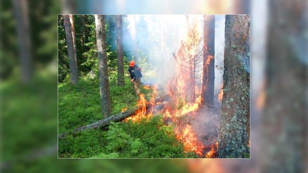 Туристы подвергают опасности леса Крыма