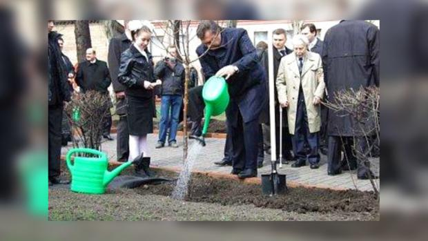 Янукович сажает рябину