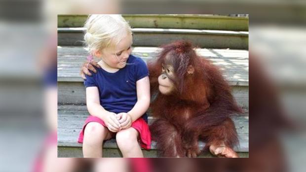 Эмили и ее подружка орангутанг Риши
