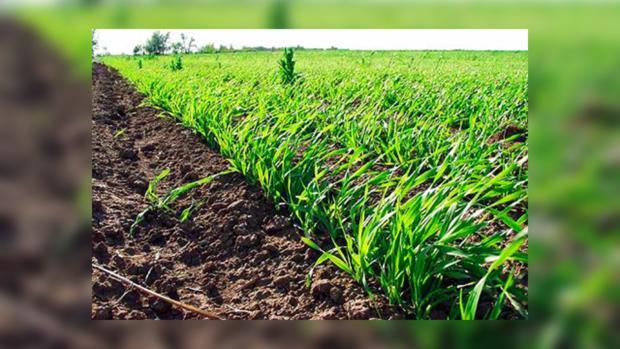 Украинские поля уже пострадали от «пустых» семян
