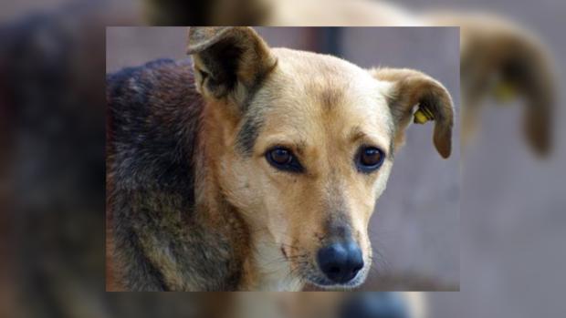 В Украине негуманно относятся к бездомным животным