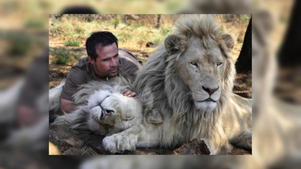 Кевин Ричардсон и львы - лучшие друзья