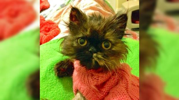 Кошечка Фрида: разве не красавица?!