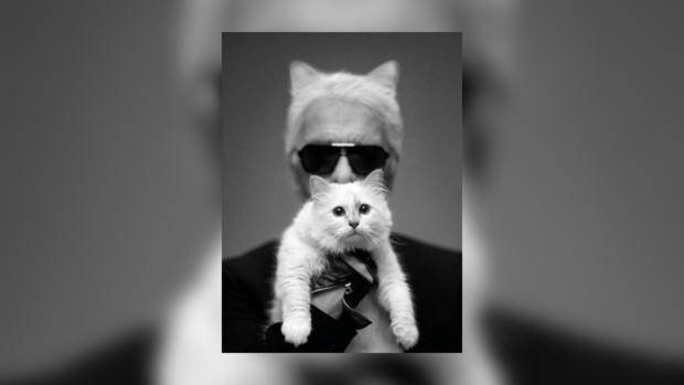Лагерфельд предпочитает в жены кошку
