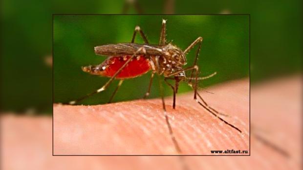 Полных людей комары кусают чаще