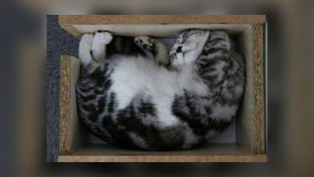Коробка защищает от опасности.