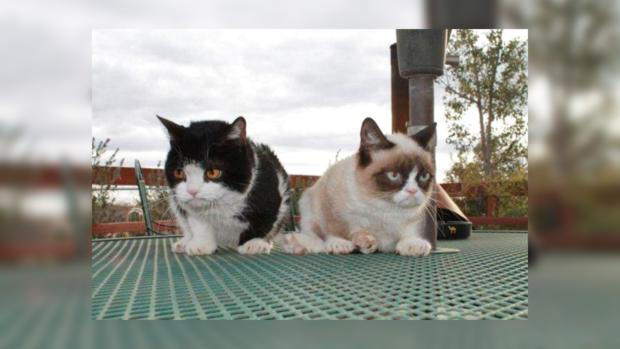 Тартар и Поки теперь звезды Интернета.