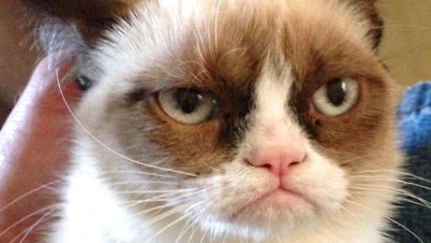 Grumpy Cat стала знаменитой.