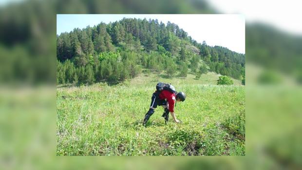 В Крыму введут налог за сбор ягод и грибов