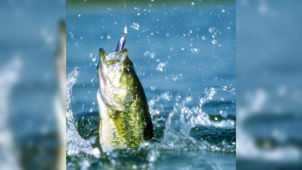 Для истинного рыбака часто сам процесс гораздо важнее, чем вес улова.