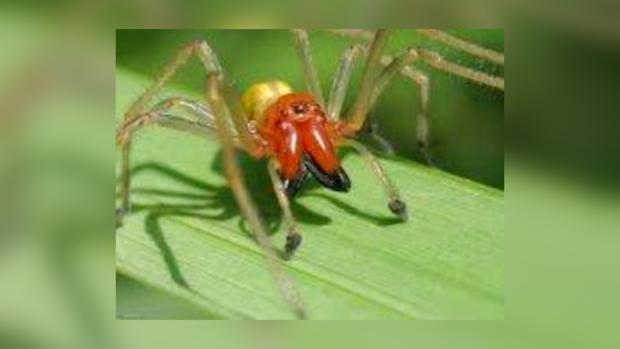 Житель Горловки обнаружил ядовитого паука у себя на машине.