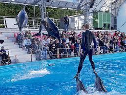 В Индии запрещены дельфинарии