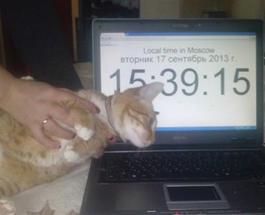 У москвички потребовали выкуп за похищенного кота
