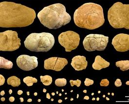 Новости археологии: в Аргентине откопали самый древний доисторический туалет
