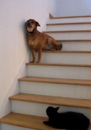 cat won\u0027t stop eating carpet freshener