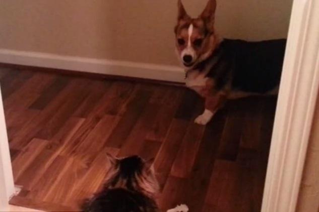 Видео собак, боящихся котов